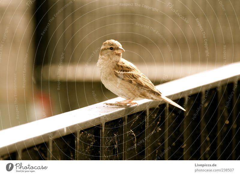 Nature Animal Loneliness Freedom Bird Wild animal Handrail