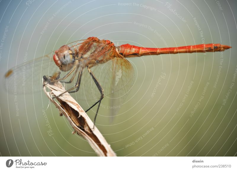 Nature Animal Environment Sit Wing Insect To feed Dragonfly Dragonfly wings