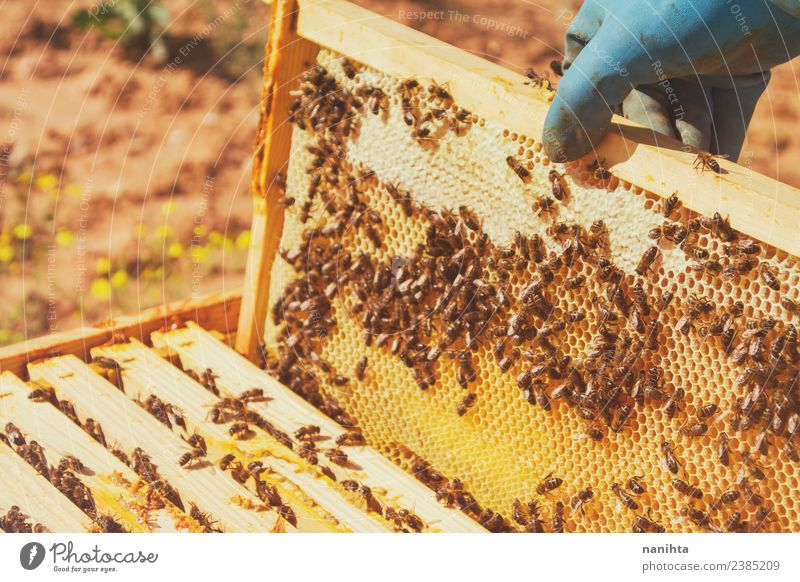 Beekeeper and his bees Food Honey Honey bee Honey-comb Nutrition Lifestyle Design Work and employment Profession Agriculture Forestry Industry Gastronomy Animal
