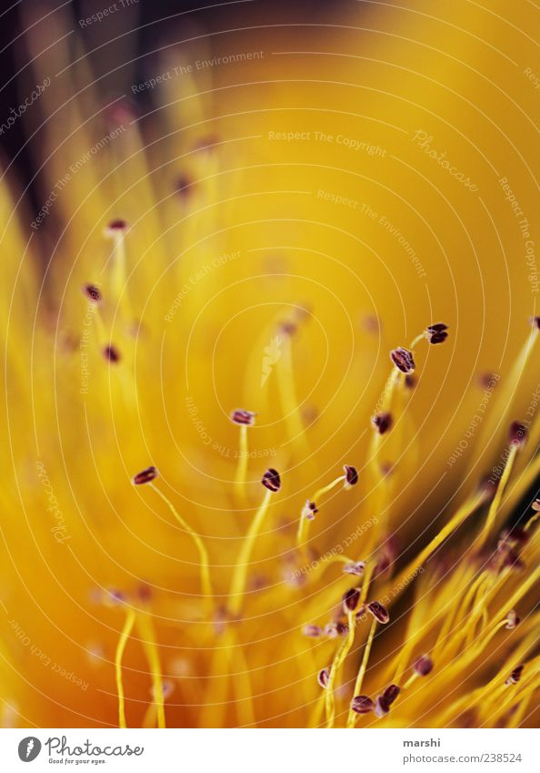 golden feelers Plant Spring Summer Flower Yellow Gold Pistil Blossom Abstract Seed Blur Cute Colour photo Close-up Detail Macro (Extreme close-up)