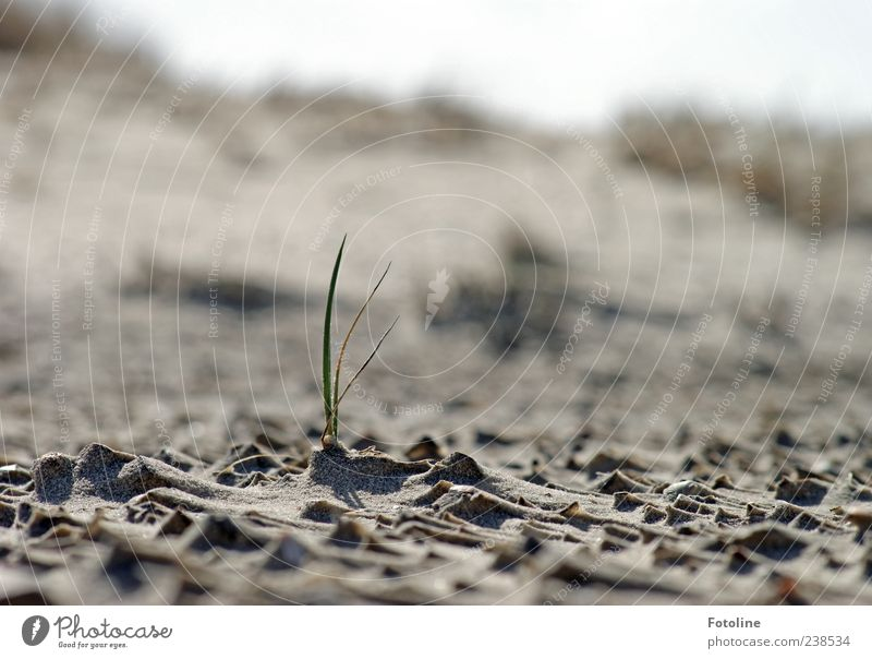 Spiekeroog Solitary Warrior. Environment Nature Landscape Plant Elements Sand Grass Wild plant Coast North Sea Bright Near Natural Green Loneliness Growth