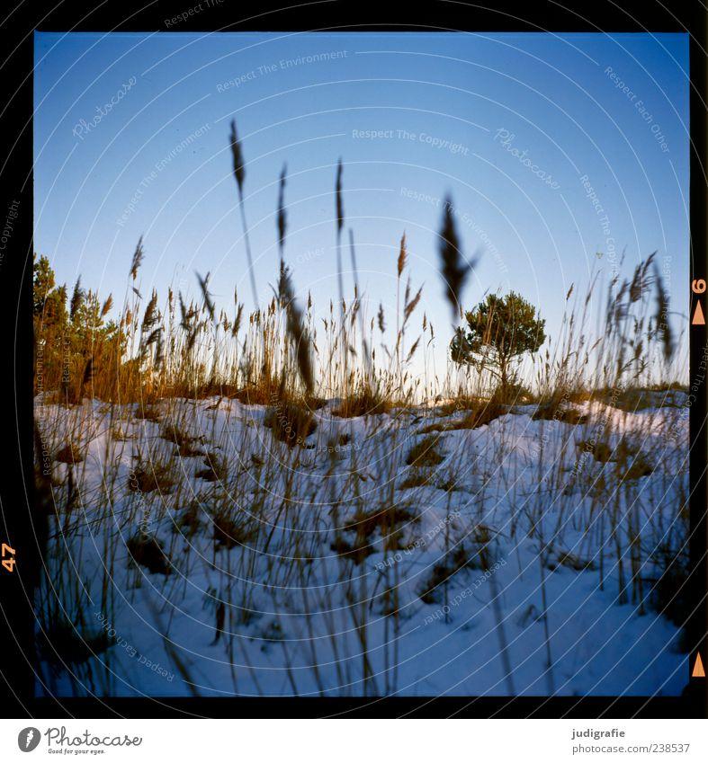 Nature Tree Plant Winter Landscape Snow Grass Moody Wild Natural Blue sky Darss
