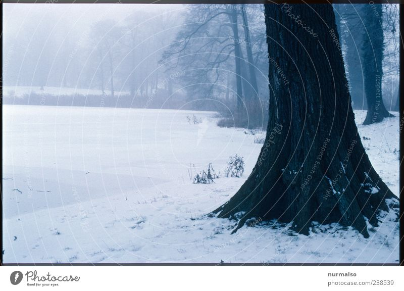Nature Tree Plant Winter Loneliness Environment Landscape Dark Cold Snow Sadness Park Moody Ice Weather Fear