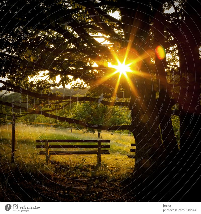 sunbed Nature Summer Beautiful weather Warmth Tree Meadow Gold Green Moody Calm Hope Bench Sunbeam Shadow Colour photo Multicoloured Exterior shot Deserted