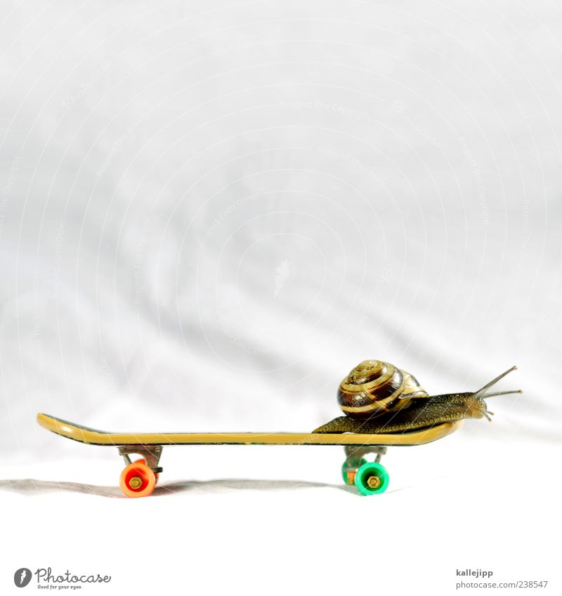 at snail's pace Lifestyle Leisure and hobbies Sports Animal Wild animal Snail 1 Movement Skateboarding finger skateboard Crawl Feeler Snail shell Time Speed