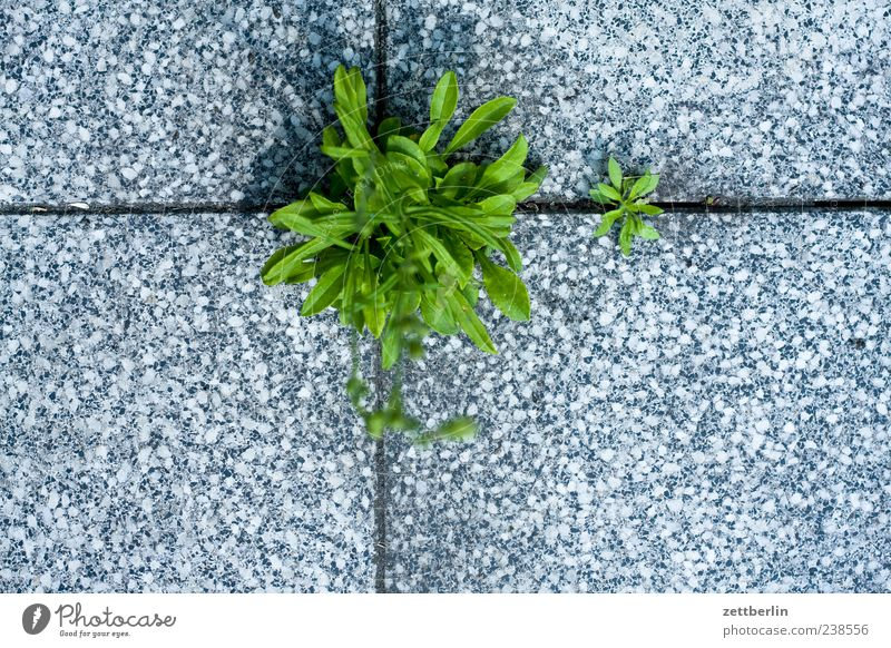 Nature Plant Summer Leaf Environment Garden Earth Growth Strong Tile Terrace Seam Furrow Foliage plant Paving tiles Assertiveness