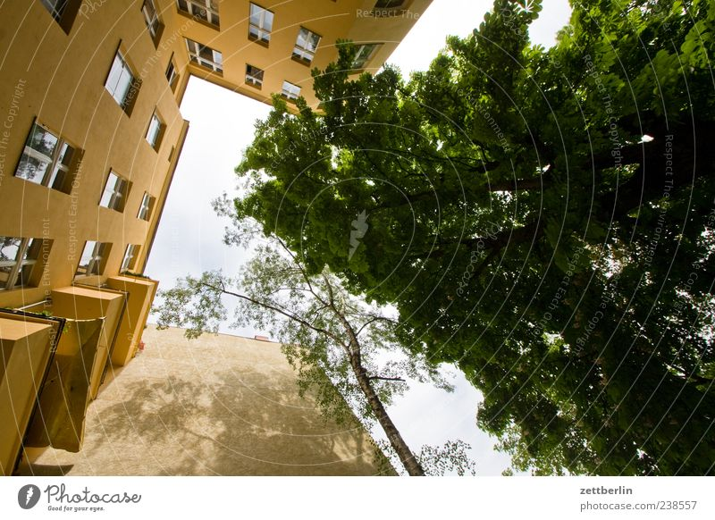 Green City Tree House (Residential Structure) Window Wall (building) Berlin Architecture Wall (barrier) Building Facade Living or residing Perspective