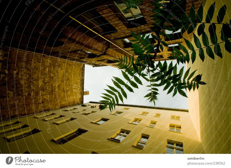 City Plant Leaf House (Residential Structure) Window Wall (building) Berlin Wall (barrier) Building Facade Living or residing Perspective Twig Downtown