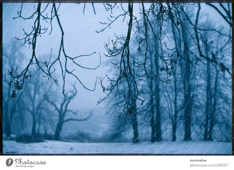 Nature Tree Plant Winter Animal Loneliness Forest Relaxation Environment Landscape Dark Cold Snow Park Ice Climate