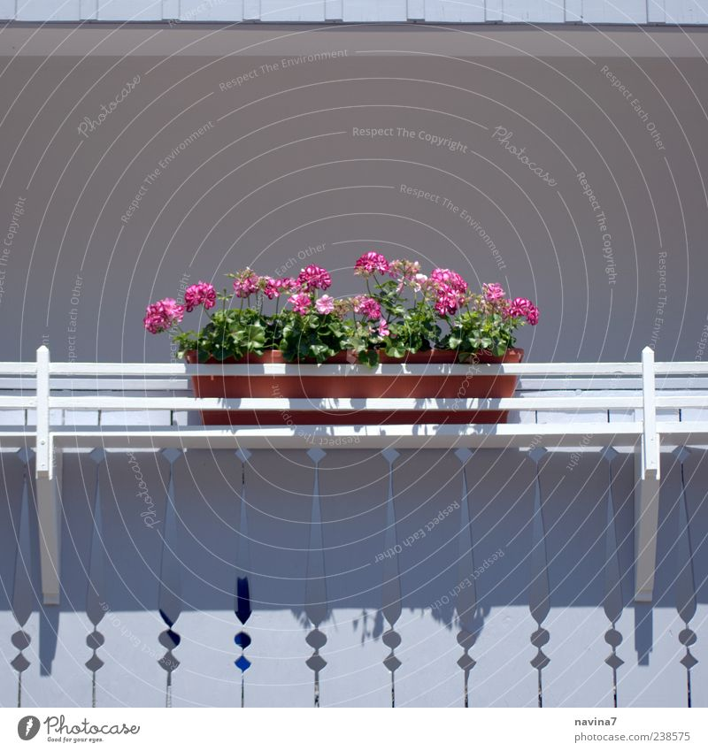 balcony idyll Vacation & Travel Decoration Plant Flower Deserted Balcony Wood Relaxation Esthetic Friendliness Pink White Colour photo Exterior shot Detail