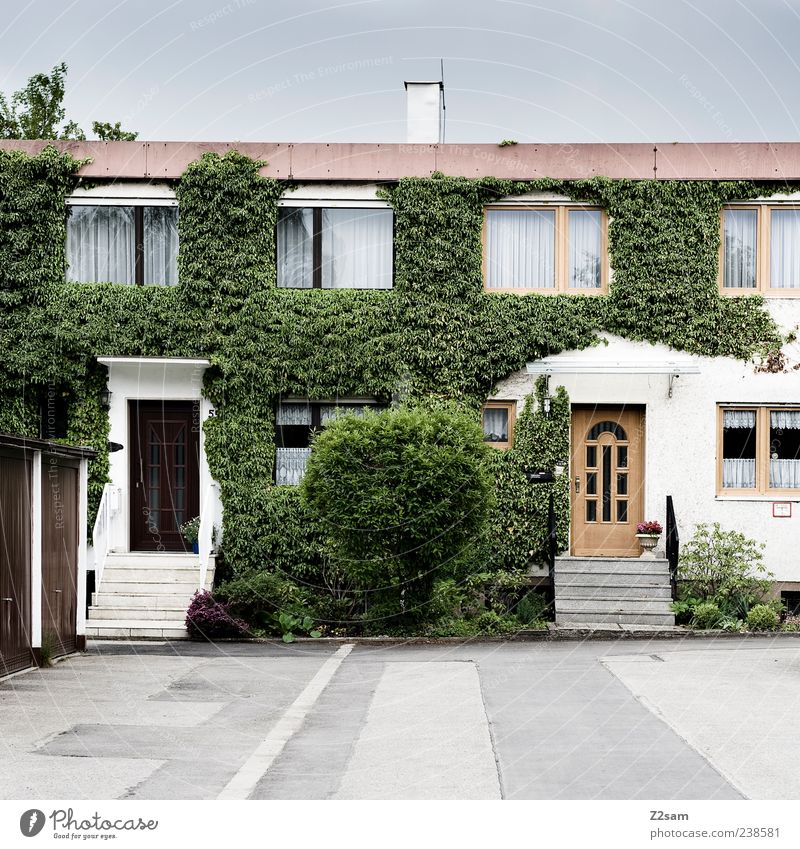 neighbors Living or residing Flat (apartment) House (Residential Structure) Environment Summer Bushes Ivy Foliage plant Village Building Architecture Authentic