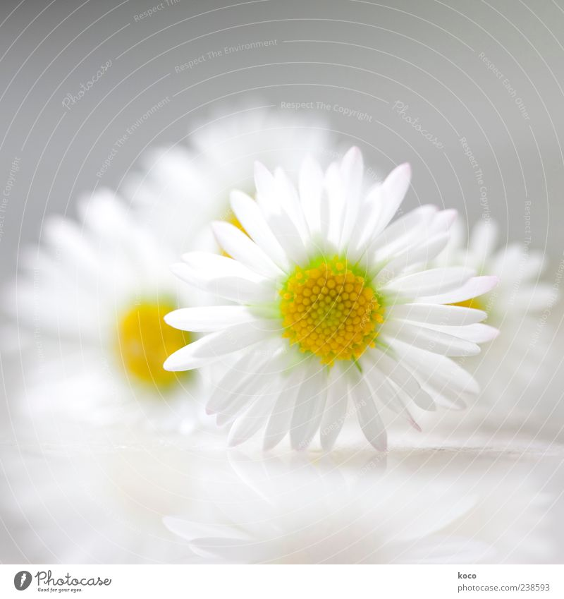 Nature White Green Beautiful Plant Summer Flower Yellow Spring Gray Small Blossom Style Elegant Fresh Esthetic