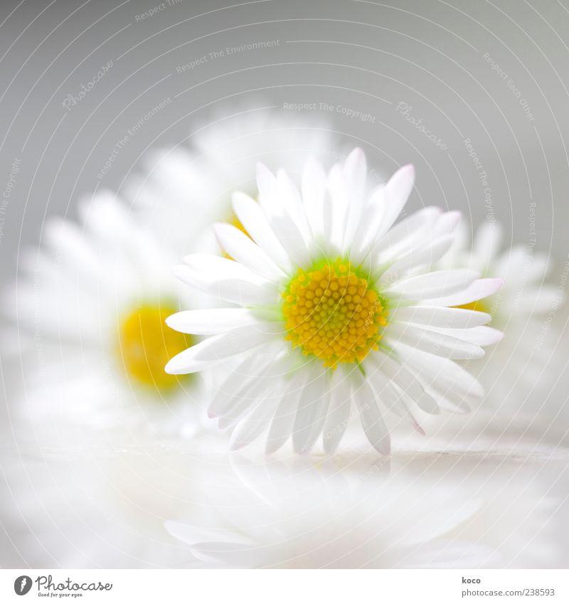 Nature White Green Beautiful Plant Summer Flower Yellow Spring Gray Small Blossom Style Elegant Fresh Esthetic