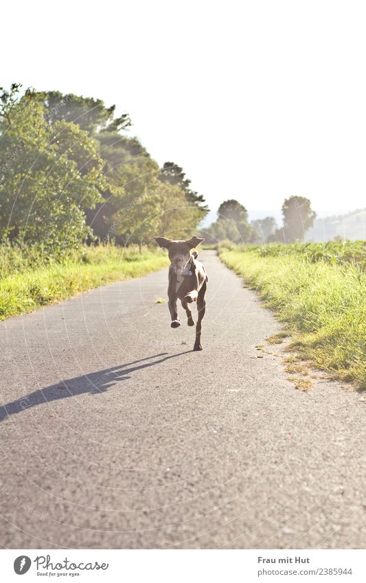 Nature Dog Landscape Sun Tree Animal Joy Life Lanes & trails Meadow Sports Grass Happy Playing Trip Leisure and hobbies