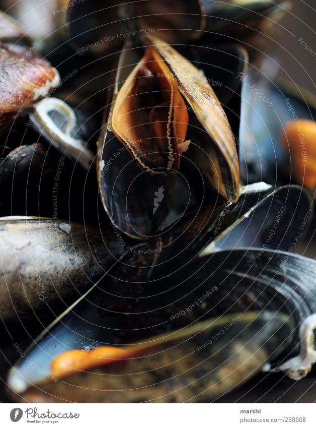 blue mussels Food Seafood Black Mussel Marine animal Detail Colour photo Interior shot Close-up Multiple Deserted