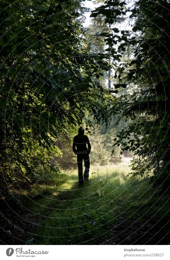 think II Calm To go for a walk Masculine Man Adults 1 Human being Nature Summer Beautiful weather Forest Footpath Going Natural Green Loneliness Lanes & trails