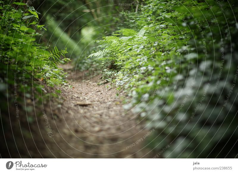 forest path Nature Plant Earth Grass Bushes Ivy Fern Leaf Foliage plant Wild plant Forest Lanes & trails Green Colour photo Exterior shot Deserted Day