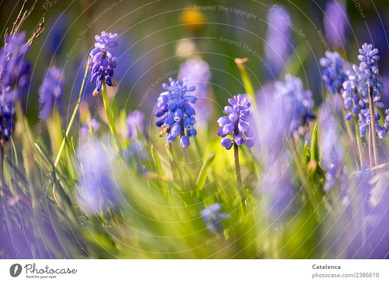 Nature Plant Blue Beautiful Green Flower Leaf Yellow Spring Blossom Garden Moody Design Esthetic Beginning Beautiful weather
