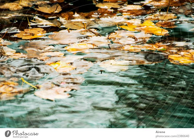 Allgäu in autumn or autumn in Allgäu Nature Water Autumn Weather Leaf Autumn leaves Lime leaf Pond Swimming & Bathing Natural Gloomy Brown Gold Orange Turquoise