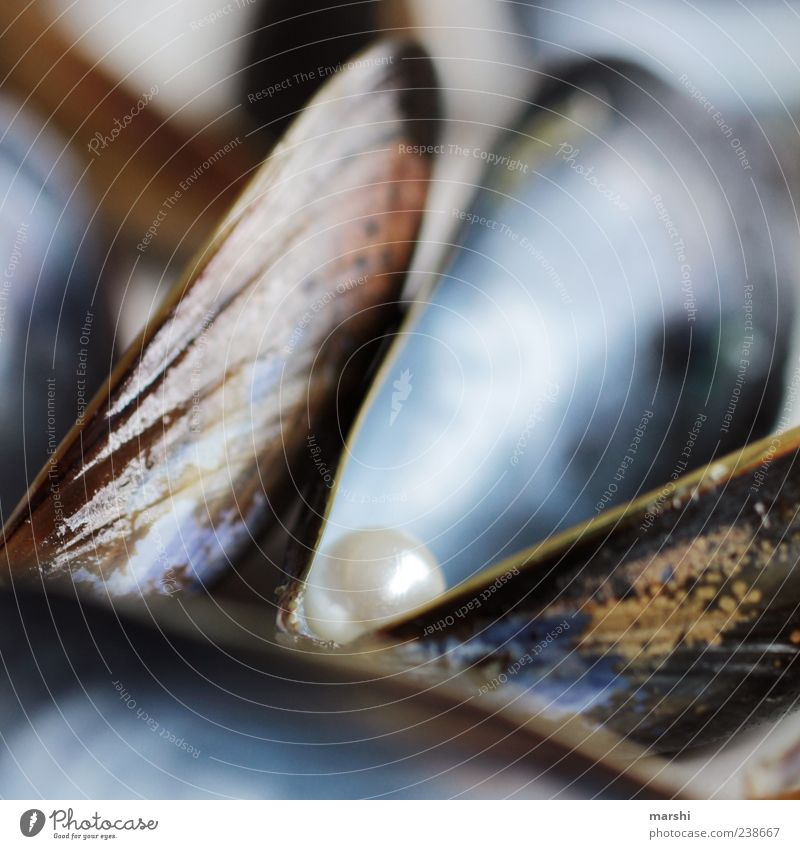Blue Nutrition Glittering Food Jewellery Surprise Pearl Mussel Precious Seafood Macro (Extreme close-up) Animal Blur Discovery Shell-bearing mollusk