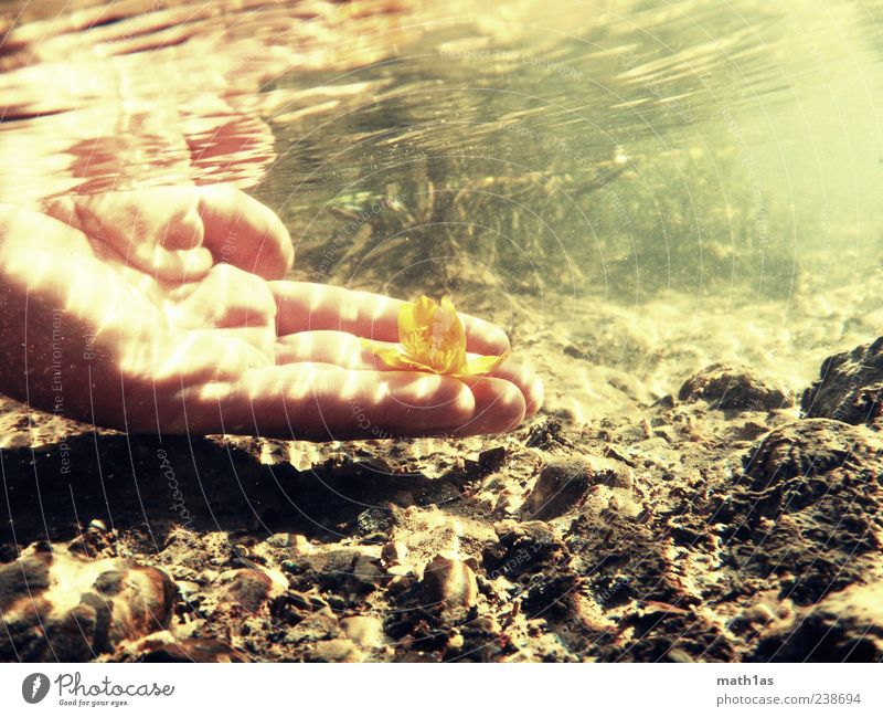 Water Hand Plant Flower Blossom Dirty Fresh Hope Transience Brook Human being Underwater photo