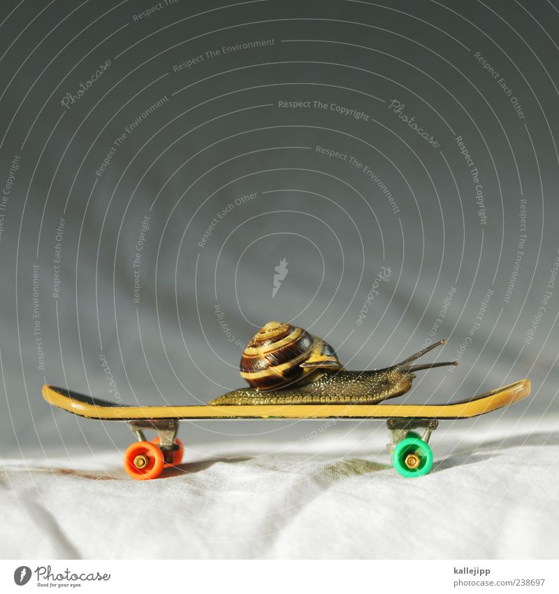 snailboarding Lifestyle Playing Snail Snail shell Skateboard Driving finger skateboard Time Speed Clever Idea Slow motion Roll Target Feeler Crawl Funny