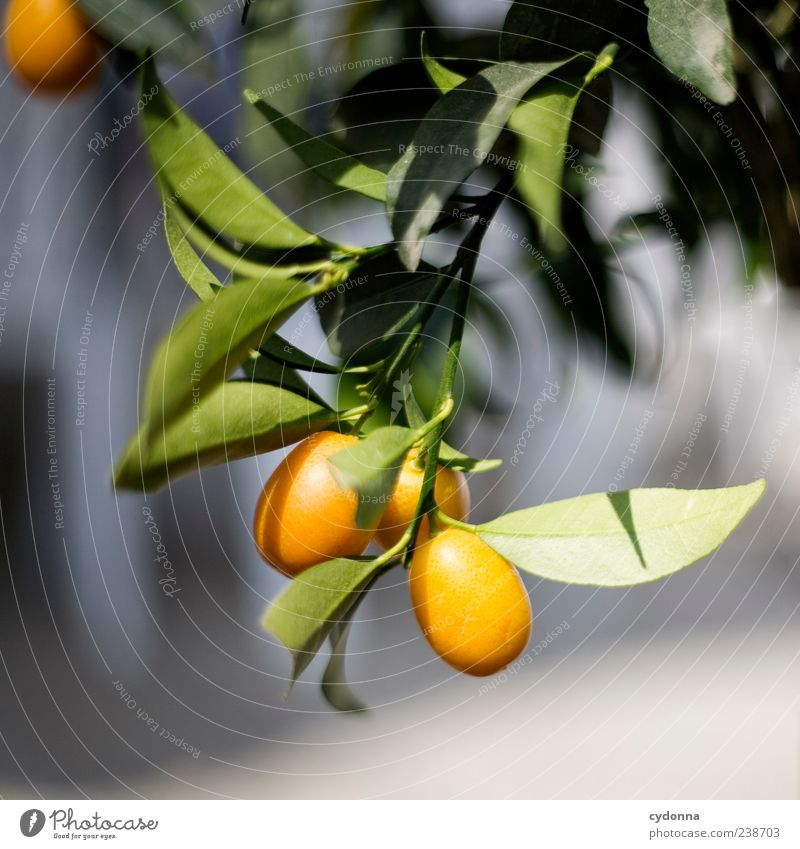 Nature Vacation & Travel Beautiful Tree Plant Summer Environment Life Time Healthy Orange Fruit Esthetic Growth Change