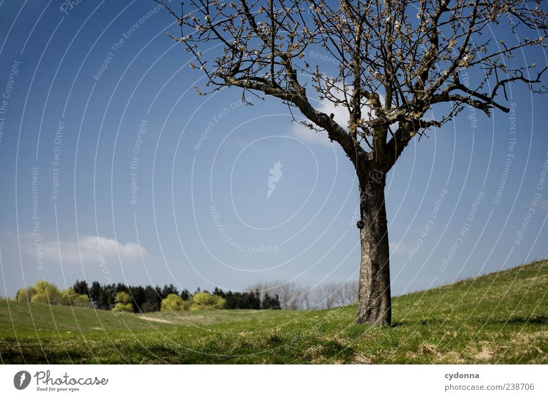 spring Harmonious Well-being Relaxation Calm Trip Far-off places Freedom Environment Nature Landscape Sky Spring Tree Meadow Loneliness Uniqueness Horizon Idyll