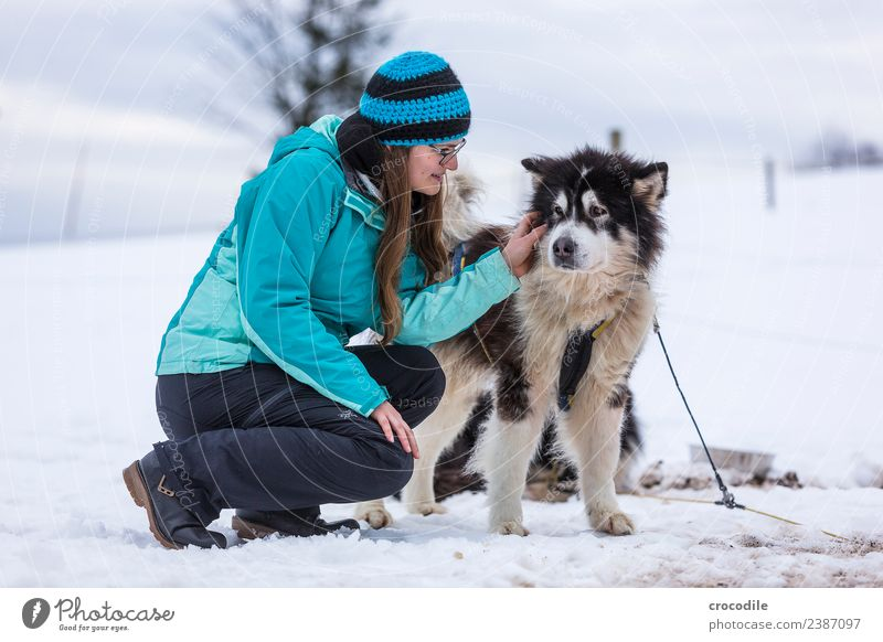# 760 Husky Dog Young woman Caress Cuddling Winter Snow Sled dog Cap Eyeglasses Blue Shallow depth of field alaskan malamut Farm animal Workaholic