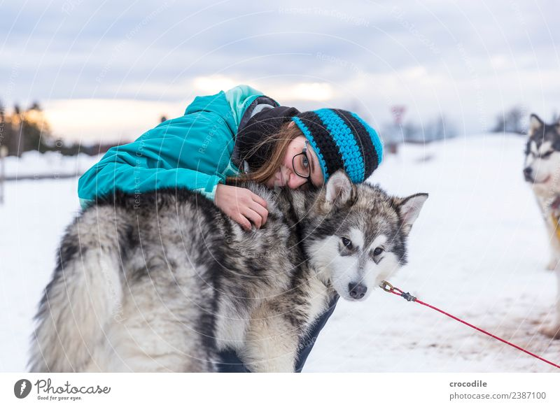# 762 Husky Dog Young woman Caress Cuddling Winter Snow Sled dog Cap Eyeglasses Blue Shallow depth of field alaskan malamut Farm animal Workaholic Sunset Love