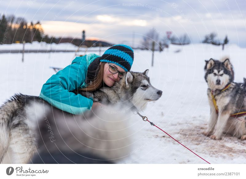 # 761 Husky Dog Young woman Caress Cuddling Winter Snow Sled dog Cap Eyeglasses Blue Shallow depth of field alaskan malamut Farm animal Workaholic Sunset Love