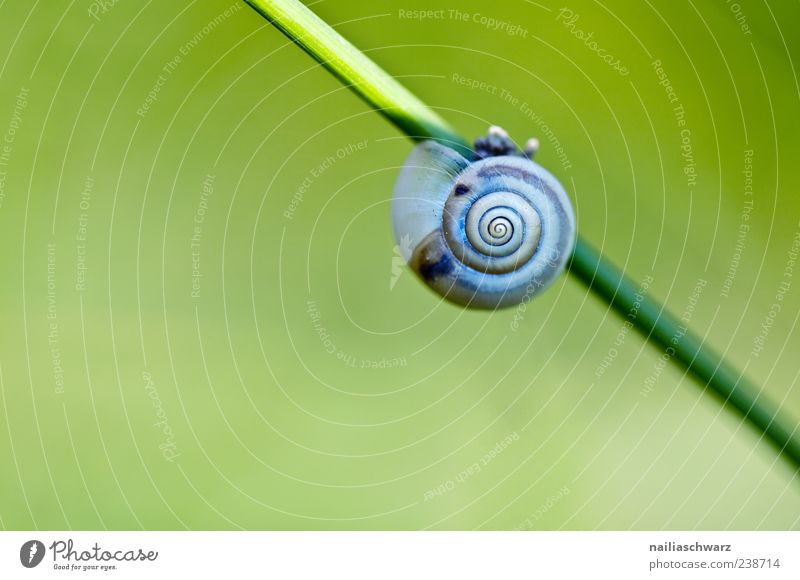 snail Environment Animal Spring Plant Grass Blade of grass Meadow Snail Snail shell 1 Sleep Esthetic Blue Gray Green Slowly Colour photo Multicoloured