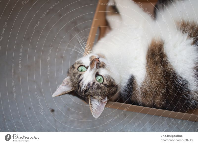 Cat Animal Calm Relaxation Lie Wait Observe Pelt Pet Box Packaging Package Goof off
