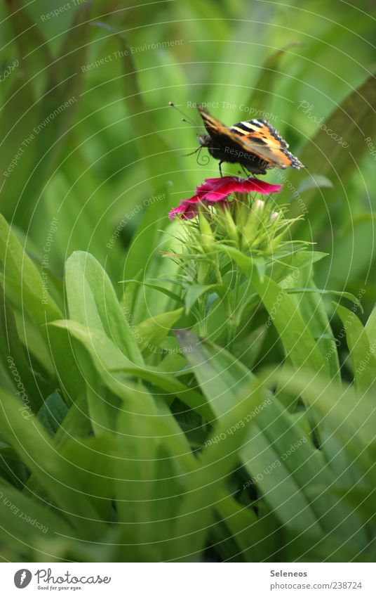 flutter by Trip Summer Environment Nature Landscape Plant Animal Spring Grass Leaf Blossom Garden Park Meadow Butterfly Small Colour photo Exterior shot Detail