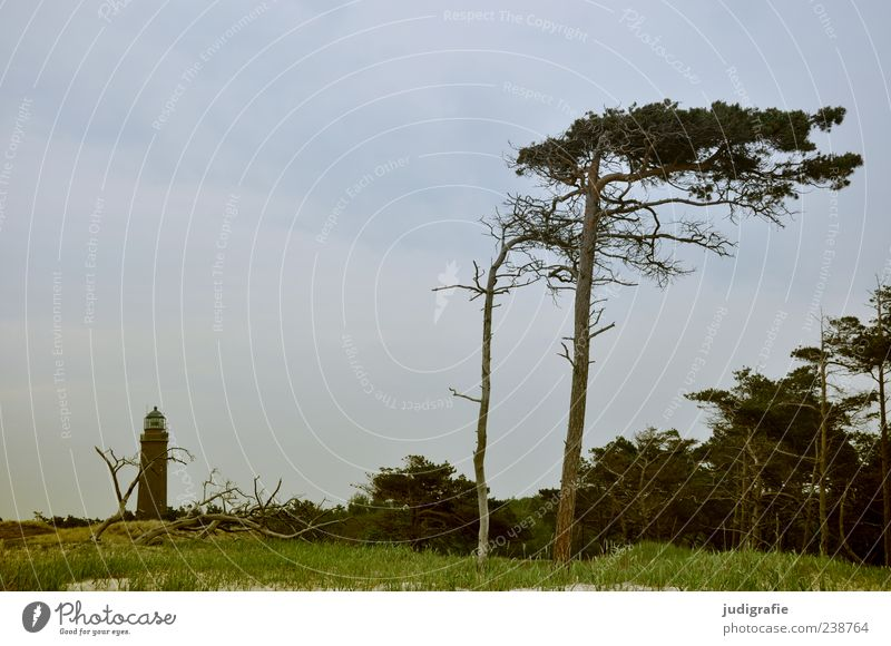 Darß Place Environment Nature Landscape Plant Sky Summer Tree Grass Coast Baltic Sea Ocean darßer place Darss Prerow Lighthouse Natural Wild Orientation
