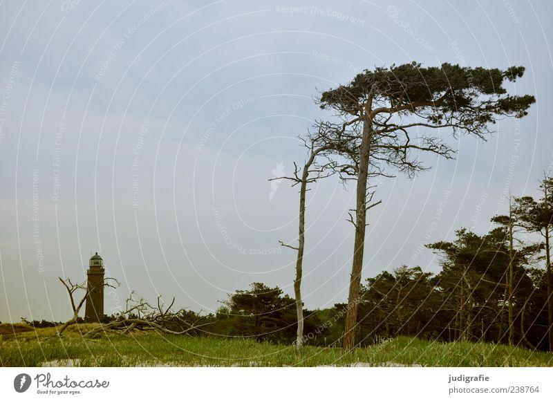 Nature Sky Tree Ocean Plant Summer Grass Landscape Coast Environment Wild Natural Lighthouse Baltic Sea Navigation Darss