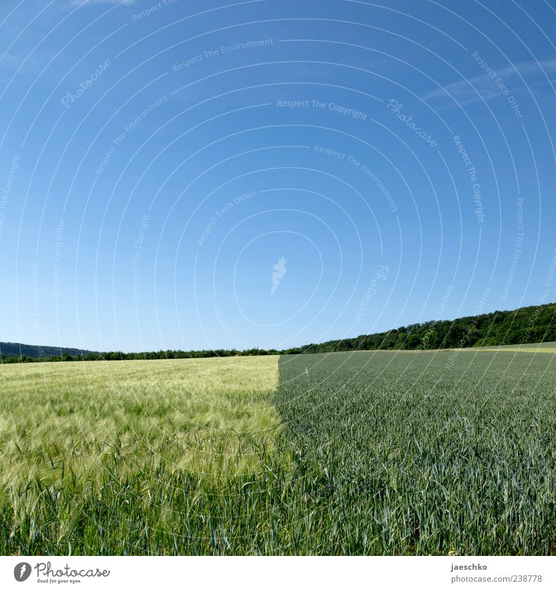 Sky Nature Green Plant Summer Far-off places Yellow Horizon Field Large Beautiful weather Agriculture Division Border Cloudless sky