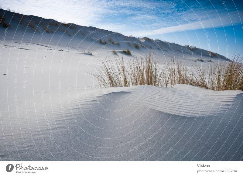 Nature Blue Vacation & Travel Beach Clouds Relaxation Landscape Dune Spiekeroog Marram grass