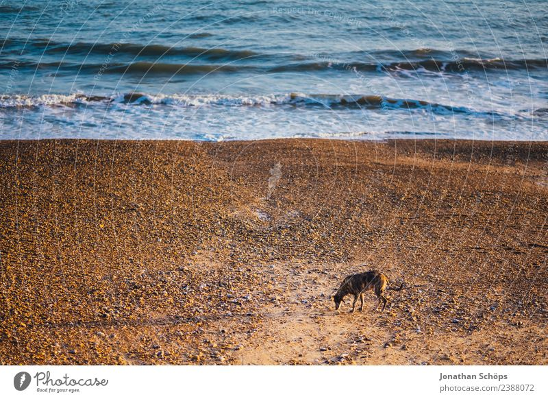 Dog alone on the beach Water Waves Coast Beach Ocean Pebble beach Brighton Great Britain Europe Port City Animal Pet 1 Poverty Sadness Lanes & trails Search