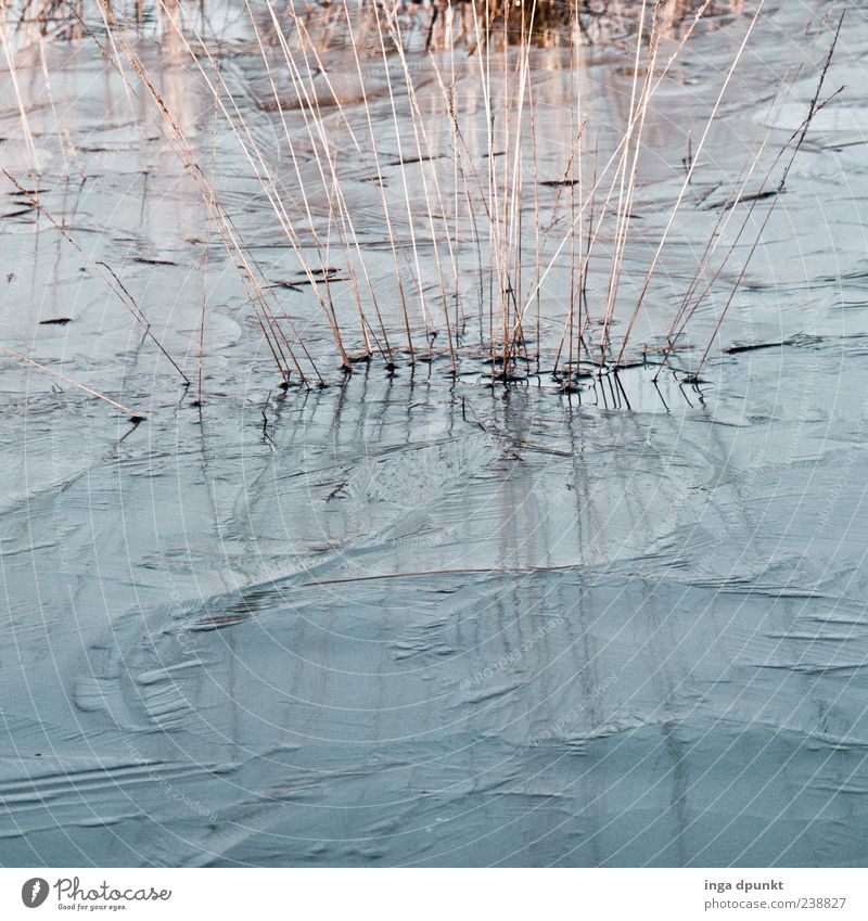 freezing cold Environment Nature Plant Elements Water Climate Ice Frost Grass Pond Lake Cold Natural Blue Gray Frozen Frostwork Colour photo Exterior shot
