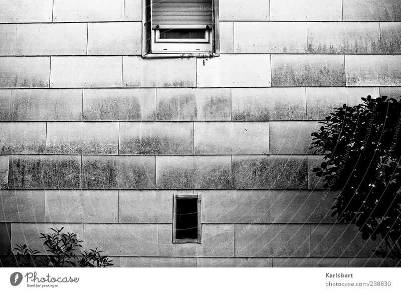 Plant Black House (Residential Structure) Loneliness Environment Window Wall (building) Gray Wall (barrier) Building Line Facade Bushes Gloomy Rectangle