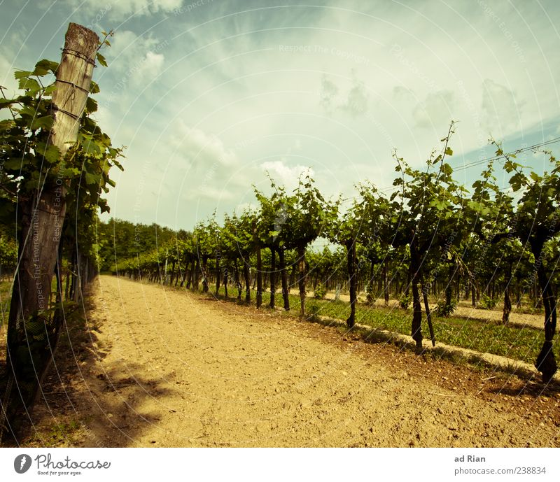 Sky Nature Summer Clouds Landscape Weather Vine Vineyard Wine growing