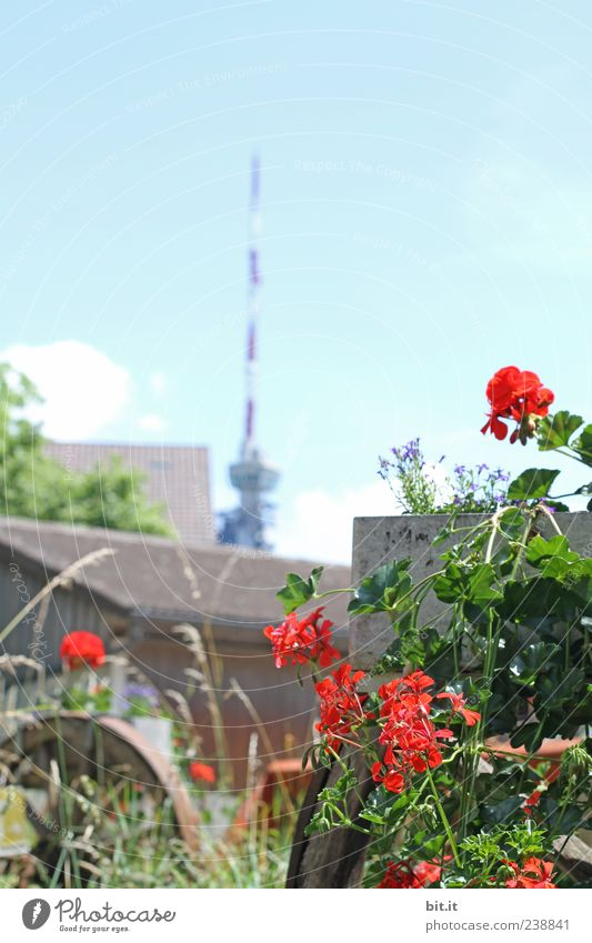 Sky Nature Red Plant Summer Flower Environment Mountain Spring Garden Blossom Air Natural Roof Tower Beautiful weather