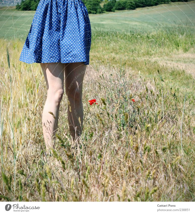 Human being Woman Youth (Young adults) Blue Beautiful Red Plant Flower Calm Adults Feminine Grass Blossom Legs Bright Field