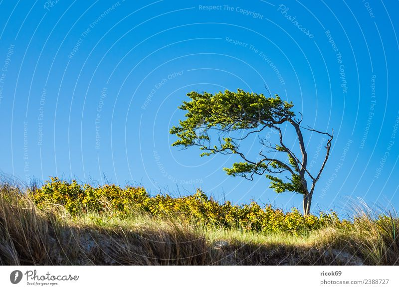 Nature Vacation & Travel Blue Green Landscape Tree Relaxation Clouds Leaf Environment Coast Tourism Weather Idyll Branch Baltic Sea