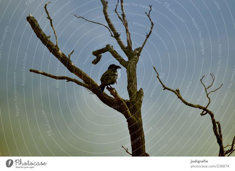 Sky Nature Tree Animal Black Environment Dark Bird Moody Wild animal Sit Natural Branch Leafless Common Raven