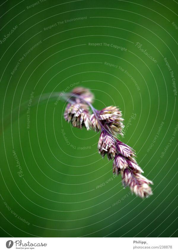 Nature Green Plant Environment Grass Stalk Blade of grass Blur