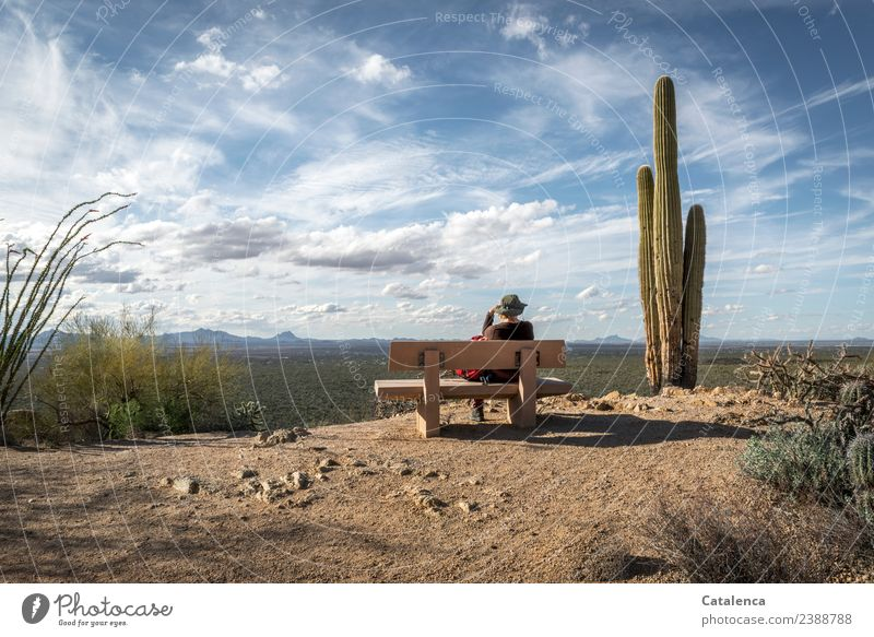 Desert landscape with cactus, bench and wide sky Feminine 1 Human being Landscape Plant Sand Sky Clouds Horizon Summer Beautiful weather Drought Bushes Cactus