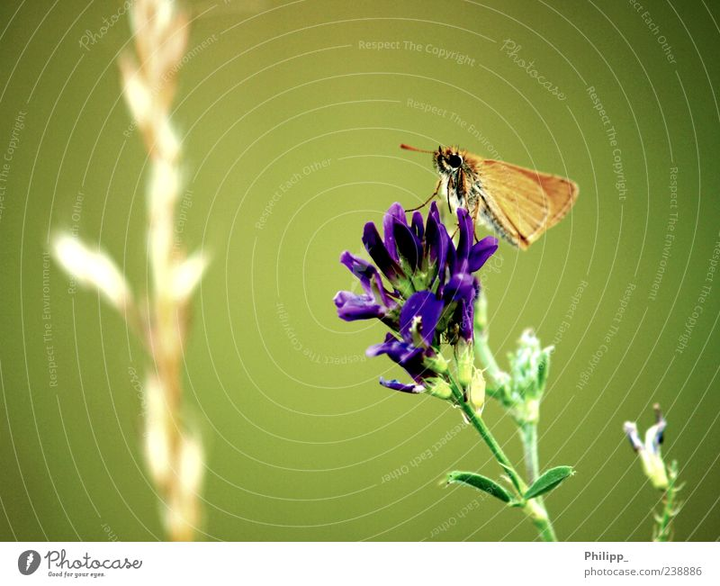 Fly butterfly, fly ... Nature Plant Blossom Wild plant Animal Wild animal Butterfly 1 Green Orange Insect Wing Colour photo Subdued colour Exterior shot