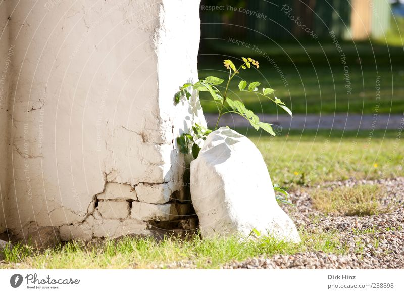New Life Nature Landscape Earth Sunlight Plant Leaf Foliage plant Wild plant Park Meadow Village Deserted House (Residential Structure) Ruin Wall (barrier)